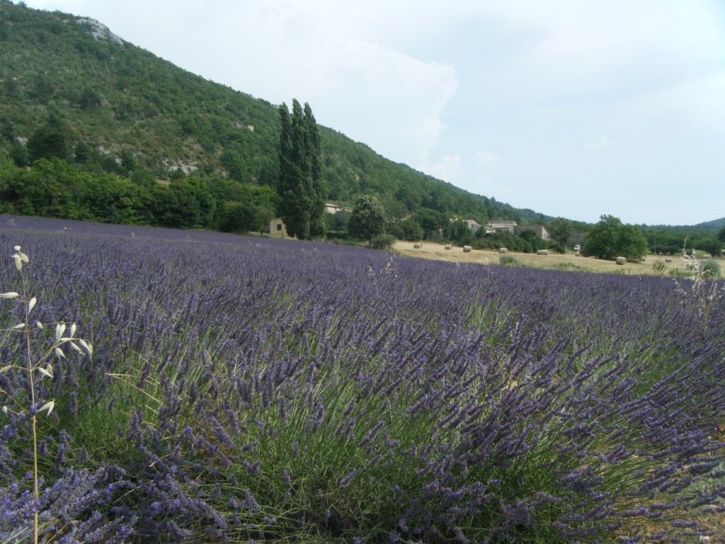Traveling through the Lavender Fields in Provence - www.AFriendAfar.com